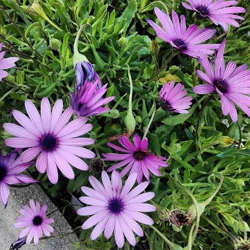 Fiorellini di nonna ❤ Santacaterinadipittinuri Sardinia Flowers Springtime Nature