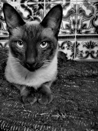 Cat Tranquility No People Fresh On Eyeem  Close-up Monochrome_life Black And White Monochrome Photography Small Animal One Animal Feline Domestic Animals Cat Lovers Animal Themes Blackandwhite Portrait Animals In The Wild Popular Animals Pure