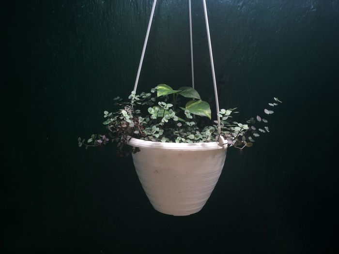 High angle view of potted plant against black background