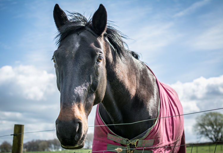 Super friendly horse. Agriculture Animal Themes Cloud - Sky Day Domestic Animals Eye4photography  EyeEm Best Shots EyeEm Nature Lover Farm Herbivorous Horse Horse Racing Livestock Mammal Nature No People One Animal Outdoors Paddock Sky Standing Wildlife & Nature