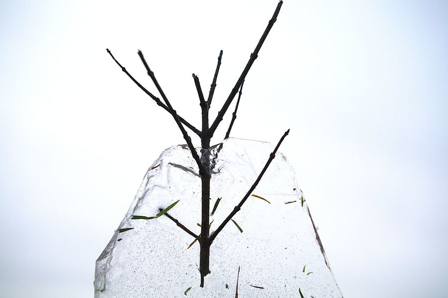 Iced Branch Branch Clear Ice Cold Frozen Water Nature No People Outdoors Wintertime