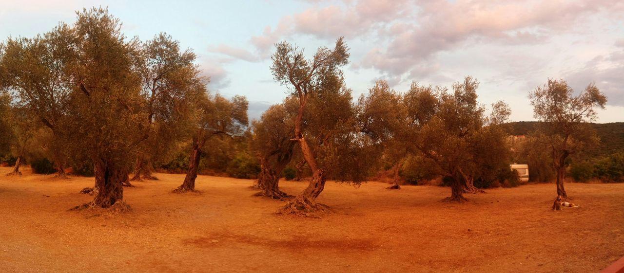 Trees RedSky Mirista