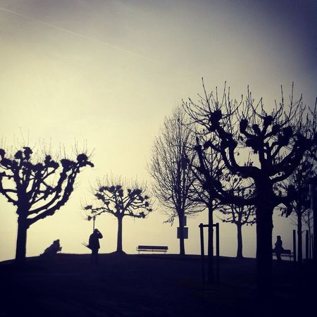 Rapperswil Trees