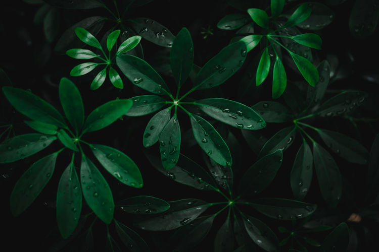 Close-up of wet leaves at night