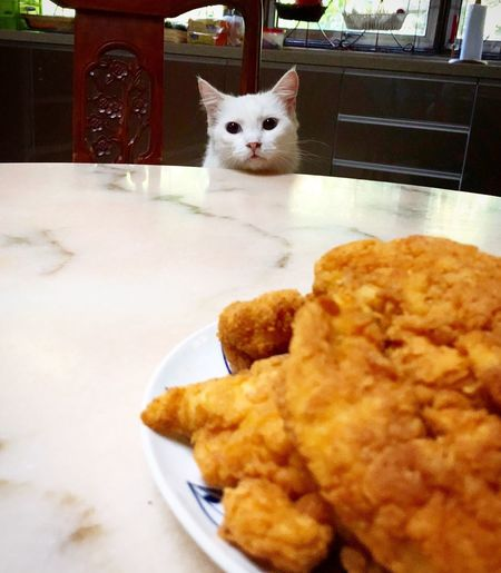 My cat & chicken tenders Home Cooked Food Marble Table Top Kitchen Stories Chicken Tenders Domestic Cat Pets Animal Themes Domestic Animals Cat Feline One Animal Indoors  Mammal Plate No People Food Ready-to-eat Day