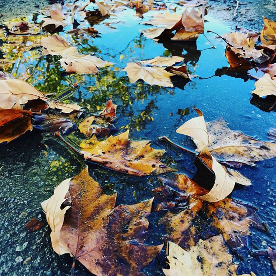 Fallen Leaves Water Reflections Enjoying Nature EyeEm Nature Lover Hanging Out With My Girl :) Beautiful Day