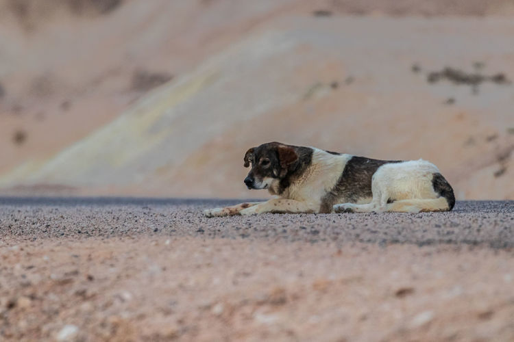 Dog looking away on sand