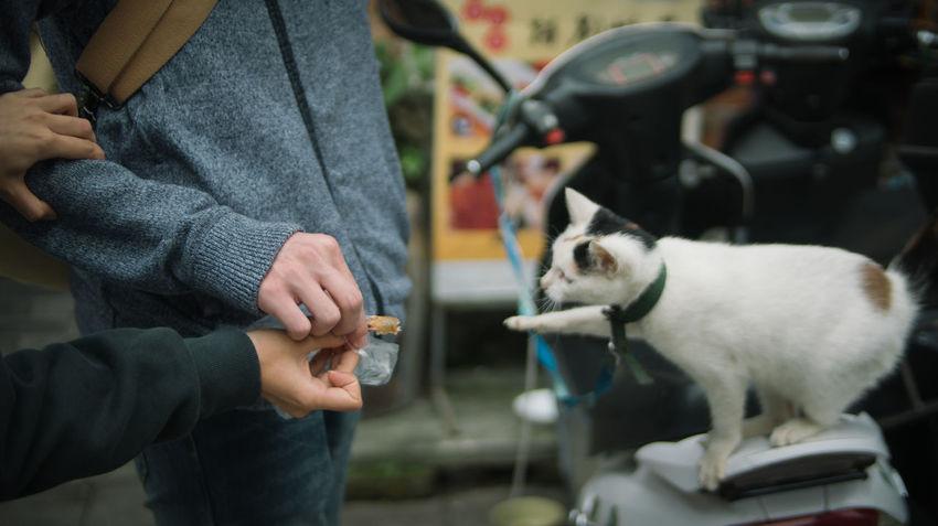 第一次亲密接触 Beihai Cat China Documentary Documentary Photography Guangzhou Pet Traveling