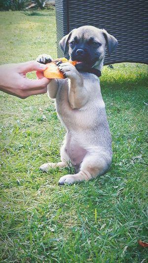Puppy Meerkat . Puppy Photography Puppys Make Us All Smile And Laugh. So Do Meerkats.eeyem Meerkats