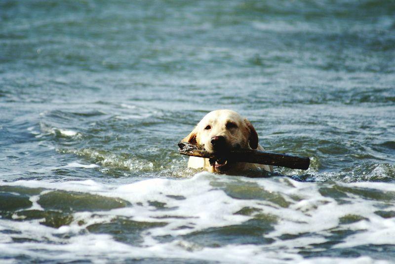 Snapshots Of Life Dog Life Swimming Dog Waves Waves Crashing Dog Playing With The Animals Growing Better The Great Outdoors - 2015 EyeEm Awards