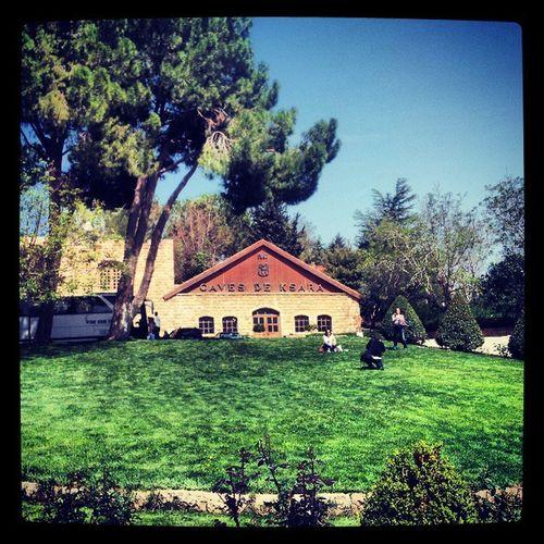 Ksara Chateauksara Winery Wine bekaa lebanon TagsForLikes instawine instagood