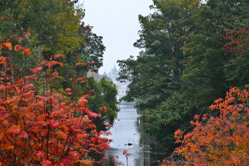 Autumn Herbst Herbstfarben Herbststimmung Lake View London Nature Season  St James Park London  Tranquility Tree