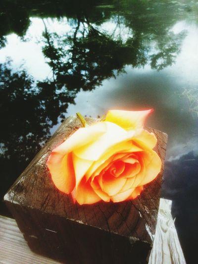 Pink Rose Water_collection Lake