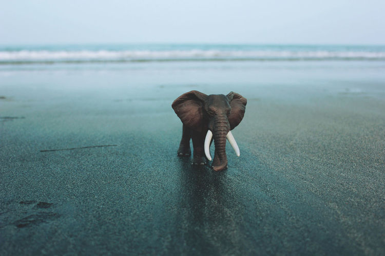 View of elephant miniature on calm beach against clear sky