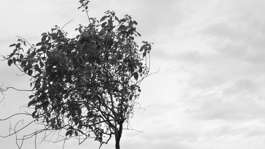 """""""Life is really simple, but we insist on making it complicated."""" -Confucius #blackandwhite #EyeEm #leaves #Plant #sad  #shades #sky #trees Nature"""