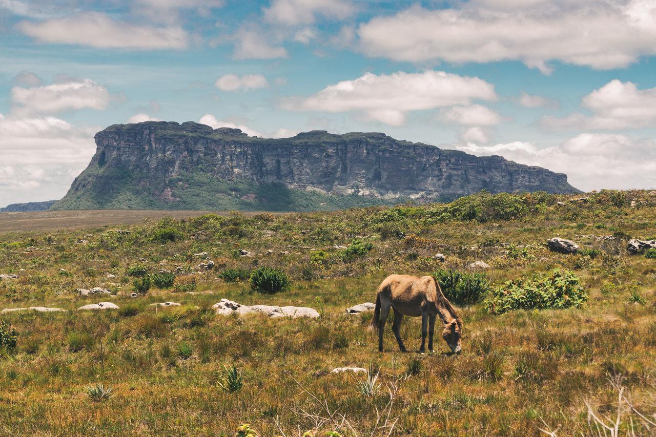Horse Grazing On Grassy Field Against Sky