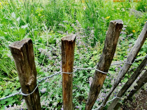 Grass And Flowers Green Grass Farmers Garden Nature Photography Naturephotography Wooden Fence Wooden Post Wood - Material Tree Trunk Grass Close-up Green Color Plant Picket Fence Fence Growing Wooden