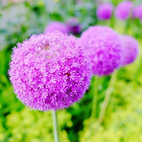 알리움 1년전 추억 삿포로 오도리공원