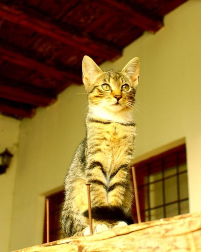 Low angle view of cat sitting on ceiling