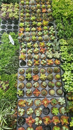 High angle view of plants growing in market