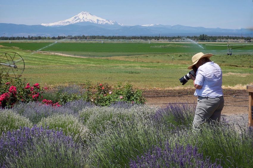 Field Nature Flower Growth One Person Real People Beauty In Nature Photographing Camera - Photographic Equipment Landscape Outdoors Standing Day Photographer Sunshine Mt. Jefferson Oregon Central Oregon Lavender