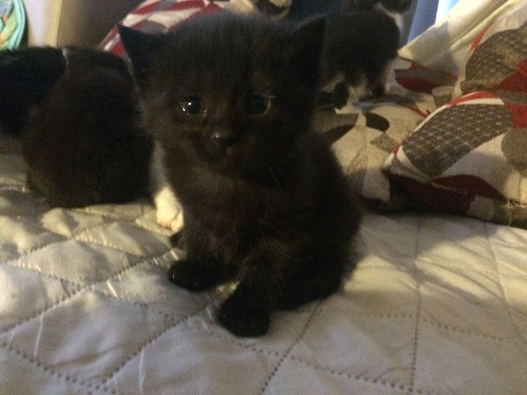 Domestic Animals Pets Looking At Camera Indoors  Domestic Cat Close-up No People Black Color Black Kitten Group Of Kittens Animal Themes Indoor Photography EyeEmNewHere Lieblingsteil Welcome To Black
