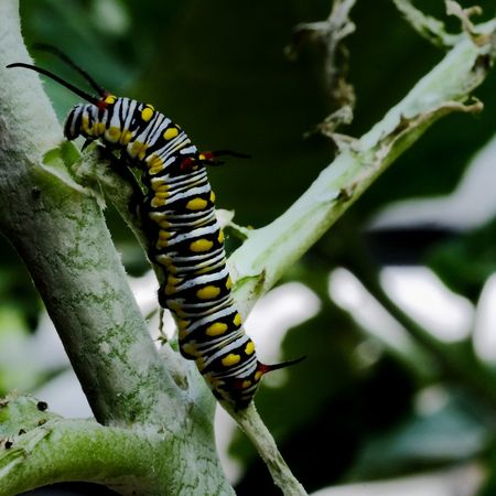 Animal Wildlife One Animal Animal Themes Close-up Animals In The Wild Insect No People Day Butterfly - Insect Outdoors Nature Worm