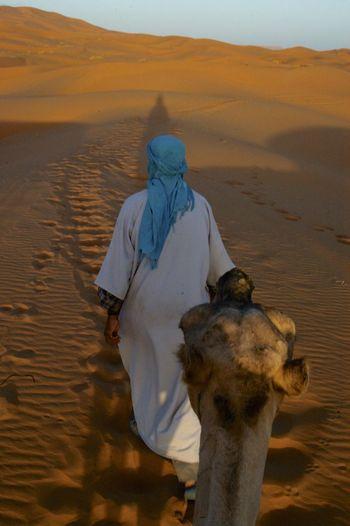 Camel trip into the Sahara desert in Merzouga, Morocco. Desert Morocco MoroccoTrip Sahara Desert Arid Climate Camel Camel Riding Camel Trip Climate Desert Domestic Animals Land Mammal Merzouga Outdoors Real People Riding Sahara Sand Sand Dune