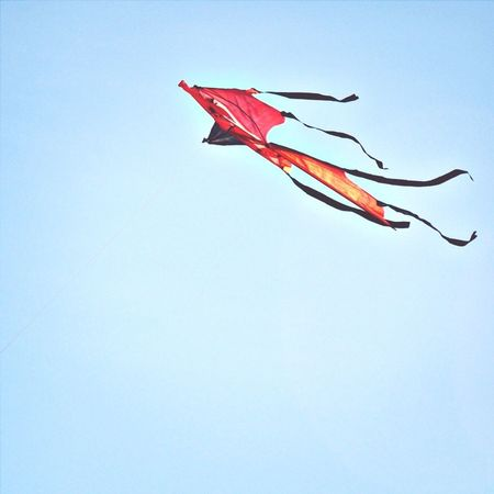 Carefree gliding... Kite Flying A Kite Flying Colors