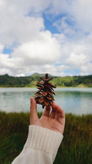 Holding pine