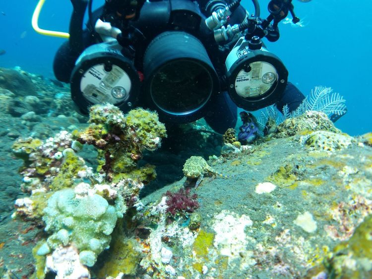 Underwater photographer shooting a blue-ringed octopus on coral in shallow water Camera Canon 550 D Inon SCUBA Scuba Diving Animal Themes Blue Blue Ringed Blue-ringed Canon Canonphotography Coral Housing Hugyfot Nature Octopus One Person Scuba Diving Sea Sea Life Strobe UnderSea Underwater Water