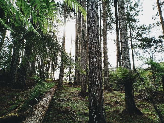 The Week on EyeEm Eyeem Philippines OPPO F7 Phone Photography Tree Forest Tree Trunk Sky Grass