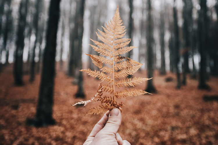 Autumn Nature The Week On EyeEm Tree Trees Autumn Close-up Day Fall Fern Focus On Foreground Forest Forest Photography Holding Human Body Part Human Hand Leaf Leaves Lifestyles Nature One Person Outdoors People Real People Tree Be. Ready.