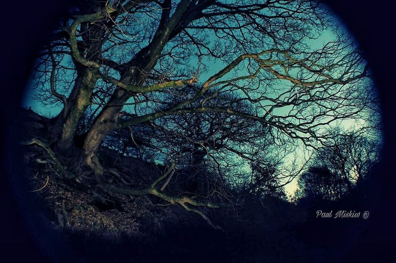Night Forest Forest Photography Tree Backgrounds Sky Close-up