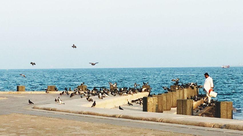 Doha,Qatar Corniche Birds Feeding  Real People