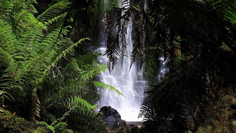 Waterfall Water Beauty In Nature Social Issues Nature No People Forest Outdoors Growth Tree Scenics Day Freshness Tasmania Russell Falls Mount Field National Park