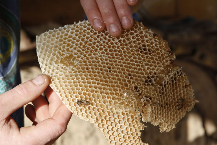 Close-Up Of Hands Holding Honeycomb