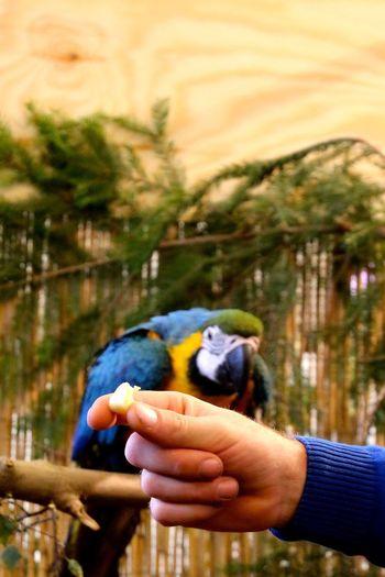 Animals Birds Bird EyeEm Best Shots