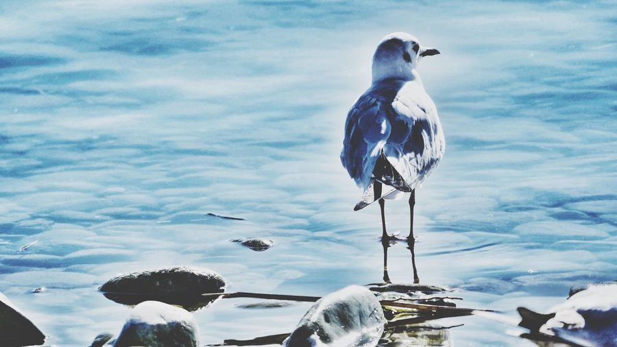 Close-up of bird perching on sea against sky
