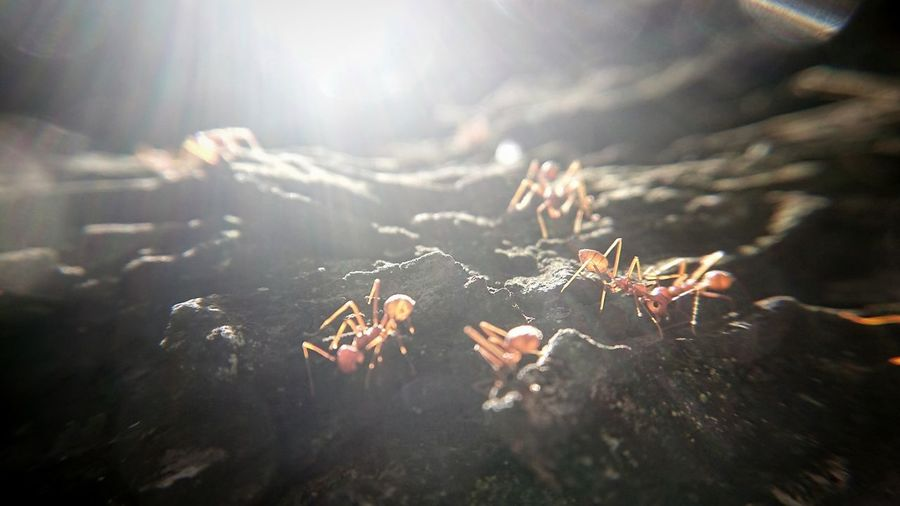 When many work together for a goal, Great things may be is said a lion cub was killed By a single colony of ants Teamwork Antslife PhonePhotography Phoneography Phonecamera Sony Sunlight Ant Ants Ants At Work Antsphotography Ants Close Up Randomshot Photography Backlight Nature