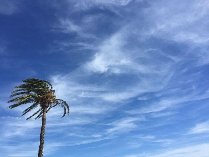 🌴 SPAIN Spanien Lacala Lacalademijas Beach Cloud - Sky Sky Palm Tree Nature Outdoors Beauty In Nature