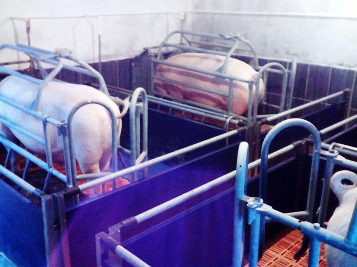 Domestic Animals Animal Themes Mammal Horse Livestock No People Day