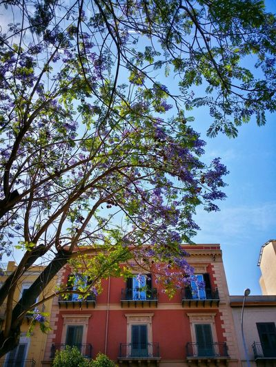 Flowered Jacaranda Trees Palermo Sicily Italy Travel Photography Travel Voyage Traveling Mobile Photography Fine Art Backlight Urban Nature's Wonders Trees Mobile Editing
