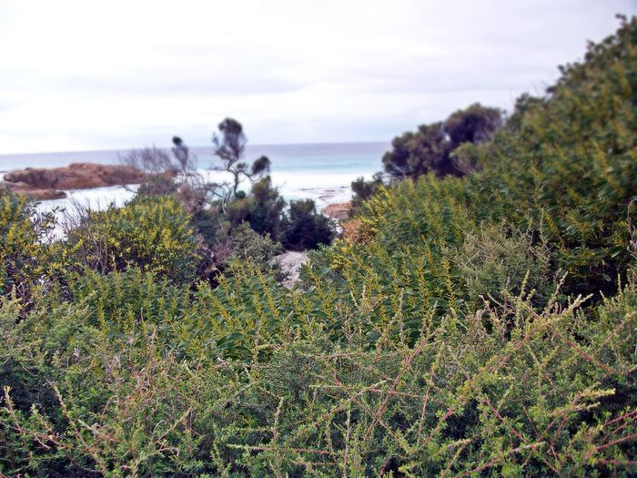 Friendly Beaches, Coles Bay Animal Themes Beauty In Nature Day Friendly Beaches Grass Growth Horizon Over Water Mammal Nature No People Outdoors Plant Scenics Sea Sky Tasmania Tranquil Scene Tranquility Tree Water