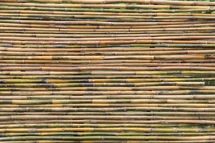 Full frame shot of bamboo background