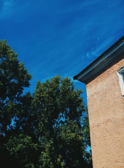Blue Sky Sky Trees Summer Rassiya