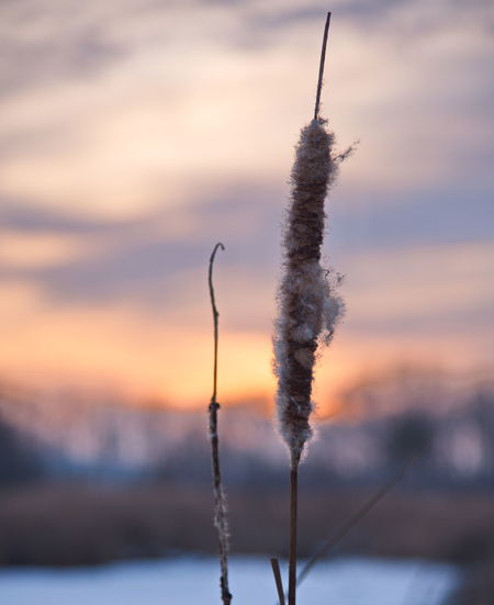 Sunset Nature Focus On Foreground Cold Temperature Water No People Frozen Plant Close-up Tranquility Cloud - Sky Outdoors Winter Beauty In Nature Sky Freshness Day
