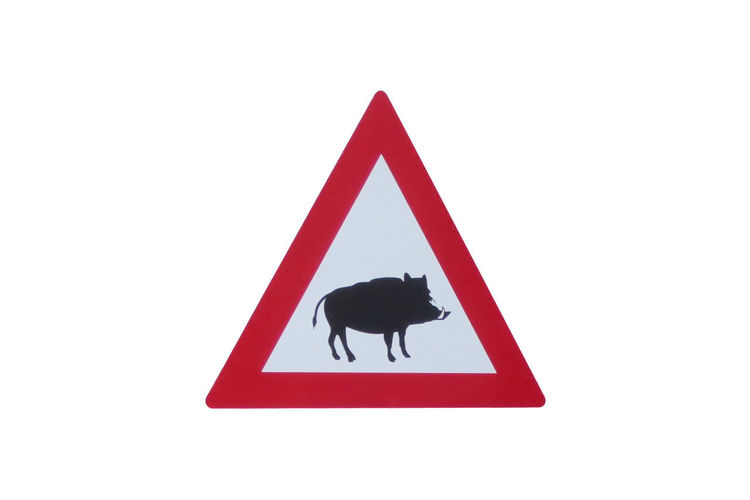 Road Sign - Road Sign - Attention Wildlife - Boar - Wildlife Danger Animal Animal Themes Close-up Communication Copy Space Cut Out Geometric Shape Indoors  Invertebrate No People Red Representation Road Sign Shape Sign Studio Shot Symbol Triangle Shape Warning Sign White Background