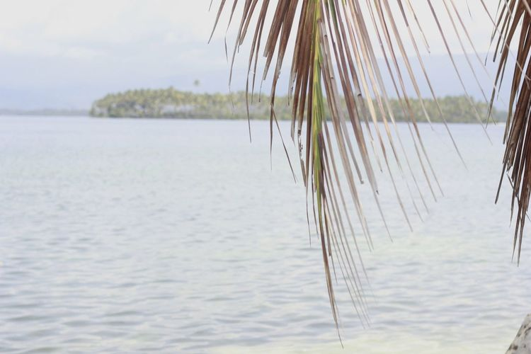 leaf Coconut