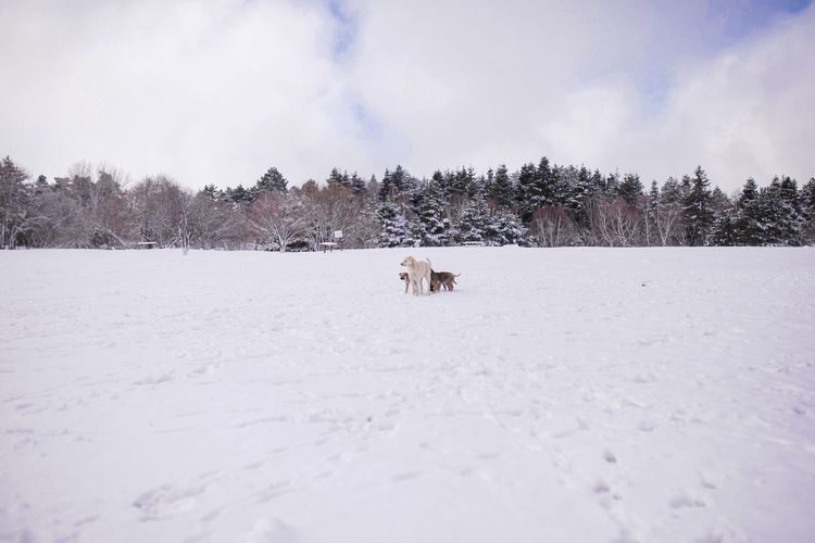 Dogs Snow White Background Winter Dogs White Cold Temperature Landscape Animal Animals Cold Trees Uludag Turkey